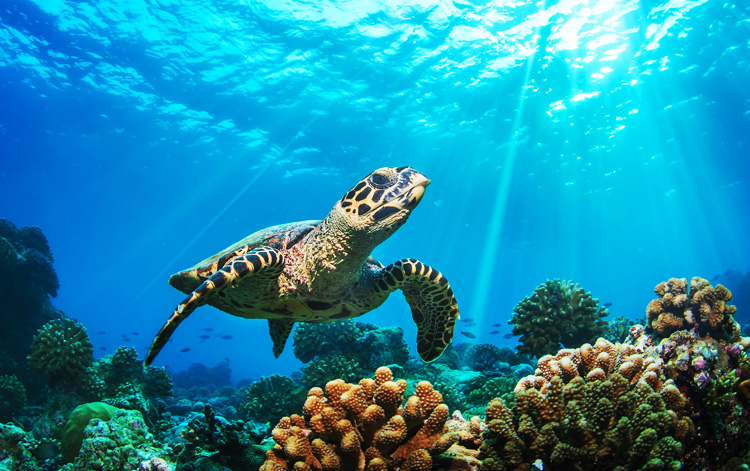 similan_s-worldcitypages